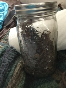 Jar of dirt from Redwood Terrace.