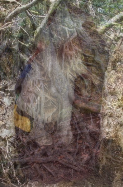 A mishmash of tree branches, roots, and forest floor, with a very fuzzy image of a child in the background.