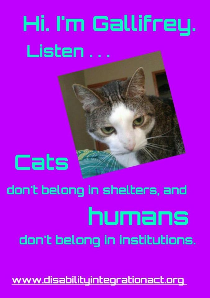 Picture of a brown tabby cat with white tuxedo markings. Purple background, blue text. Text: Hi. I'm Gallifrey. Listen... Cats don't belong in shelters, and humans don't belong in institutions. www.disabilityintegrationact.org