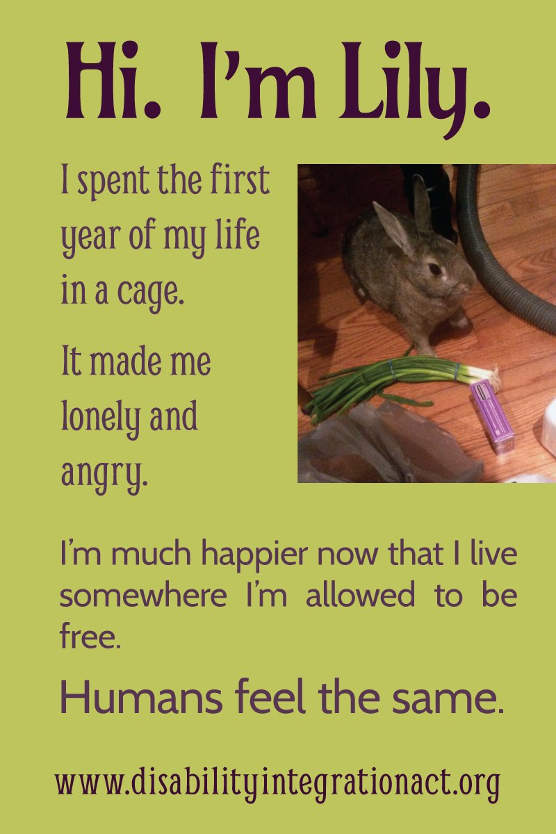 Picture of a small brown house rabbit on the floor with some vegetables and a toy. Olive green ackground, black text. Text says: Hi. I'm Lily. I spent the first year of my life in a cage. It made me lonely and angry. I'm much happier now that I live somewhere I'm allowed to be free. Humans feel the same. www.disabilityintegrationact.org