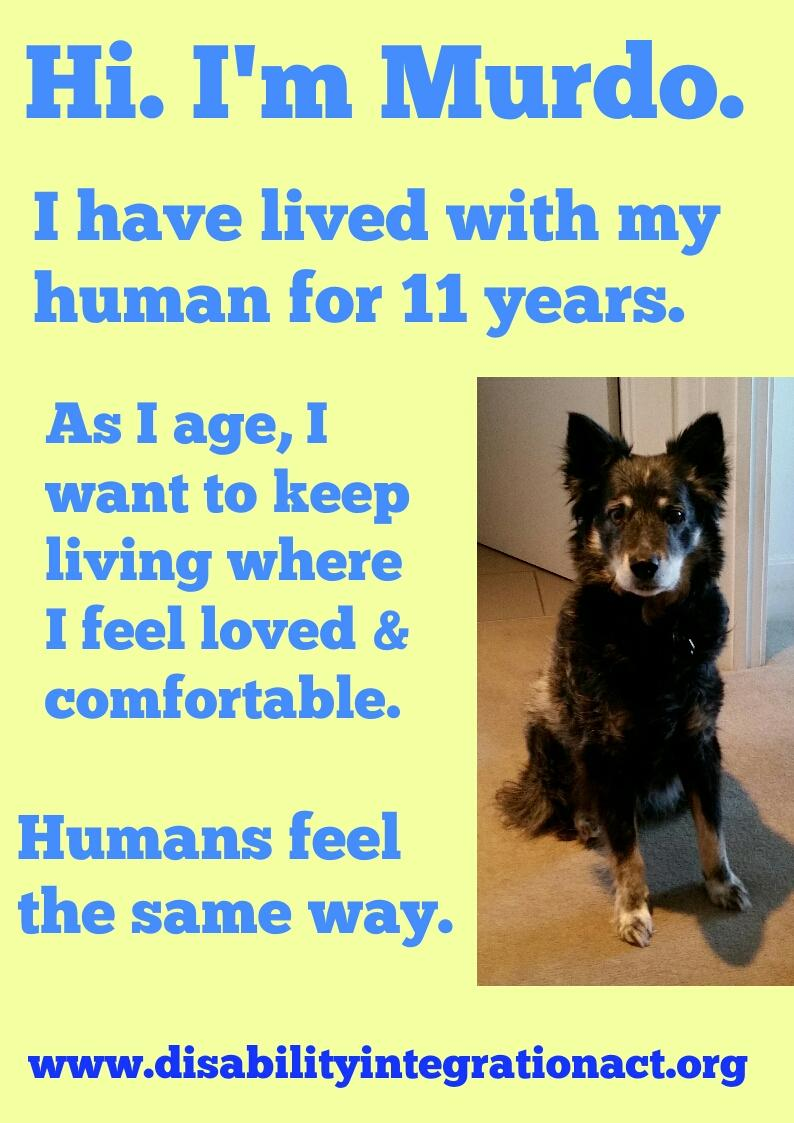 Picture of an elderly black and brown dog who is very cute. Yellow background, blue text. Text: Hi: I'm Murdo. I have lived with my human for 11 years. As I age, I want to keep living where I feel loved & comfortable. Humans feel the ame way. www.disabilityintegrationact.org